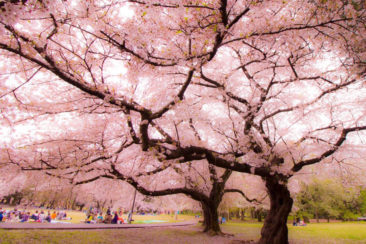 「新宿御苑」的圖片搜尋結果